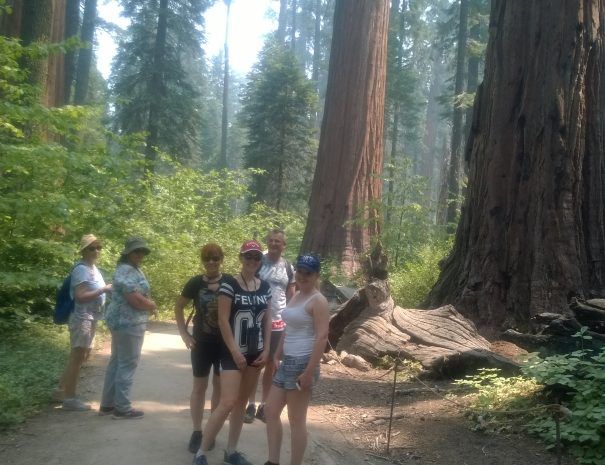 active_travel_west_usa_small_group_tours_western_usa_big_tree_ca_tours (10)