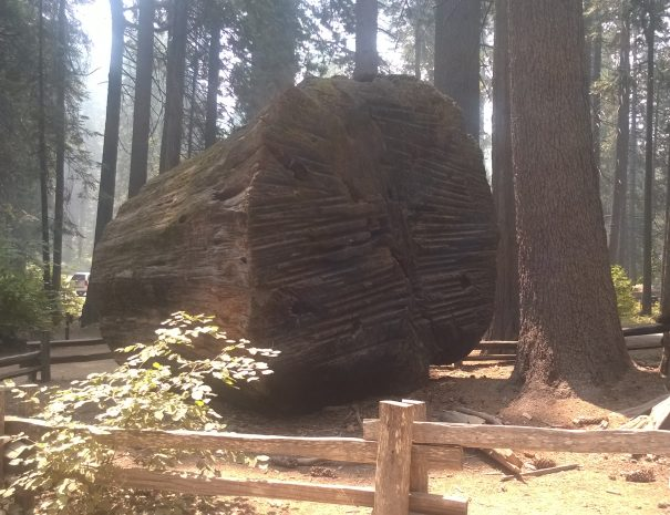 active_travel_west_usa_small_group_tours_western_usa_big_tree_ca_tours (7)