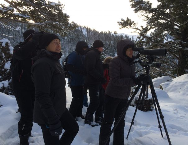 active_travel_west_usa_yellowstone_national_park_winter_small_group_snowshoe_tour (37)