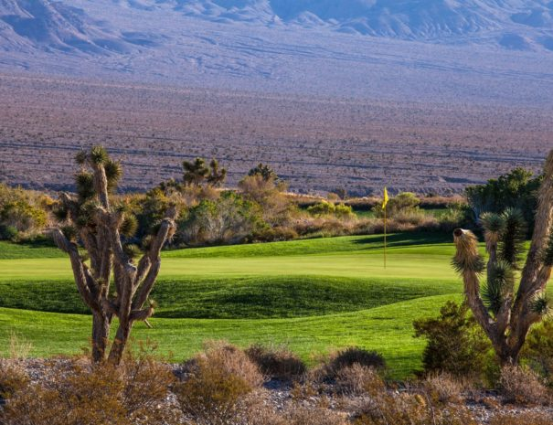 The-Wolf-at-Paiute-Golf
