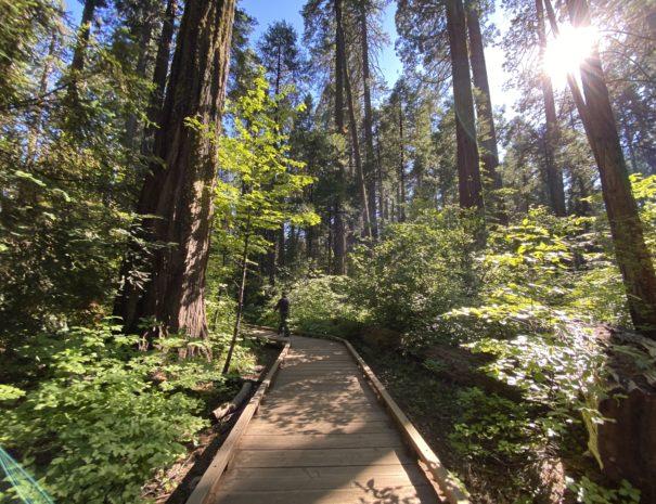 activetravelwestusa_big_trees_cavaleras_park